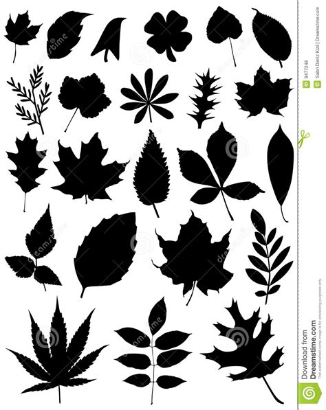 Set Of Leaf Vector Royalty Free Stock Photos   Image: 9477248