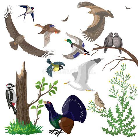Set of Wild Birds stock vector. Illustration of cute ...