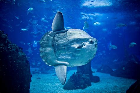 Seven species you have to see in Lisbon Aquarium   Wilder