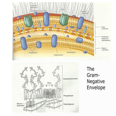 ShareMicro: DIFFERENT CELL WALL STRUCTURE