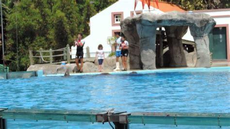Show dos Golfinhos   Jardim Zoologico De Lisboa   YouTube