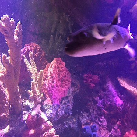 Shreveport Aquarium   2018 All You Need to Know Before You ...
