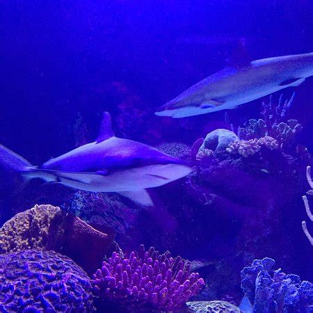 Shreveport Aquarium   2019 All You Need to Know Before You ...