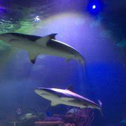 Shreveport Aquarium   88 Photos & 20 Reviews   Aquariums ...