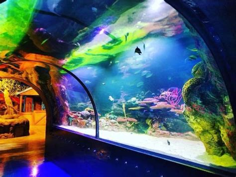 Shreveport Aquarium   All You Need to Know Before You Go ...