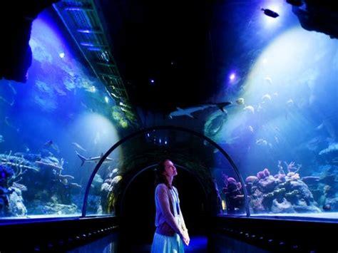 Shreveport Aquarium opening Nov. 1