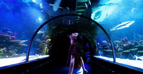 Shreveport Aquarium owes $29K in taxes to Bossier Parish ...