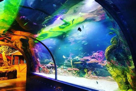 Shreveport Aquarium pays thousands in back taxes to ...