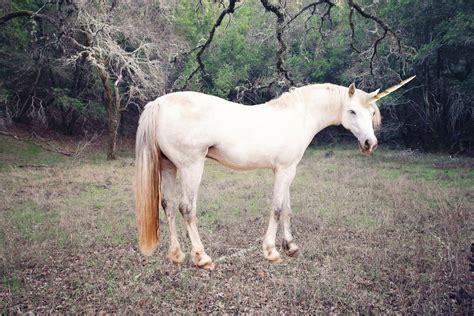Siberian unicorns  roamed the Earth 29,000 years ago ...