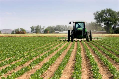 significado, agricultura, que es, definición, alimentos ...