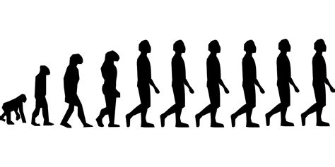 Significado de Evolución   Qué es, Definición y Concepto