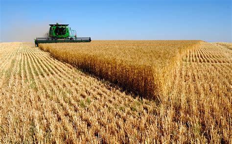 Sigue aumentando superficie destinada al cultivo de ...