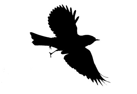 Silhouette Bird Flight Colorofashes Deviantart   ClipArt ...