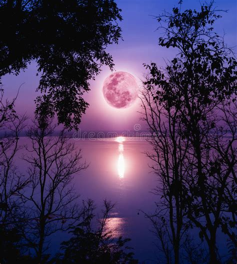 Silhouettes Of Woods And Beautiful Moonrise, Bright Full ...