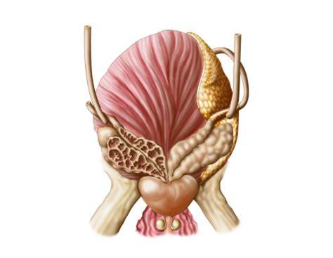 síntoma de vesícula inflamada | Salud180