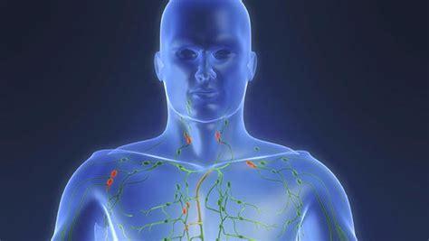 Síntomas de que su sistema linfático está obstruido y cómo ...