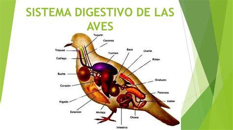 Sistema digestivo de las aves por Diana Reascos
