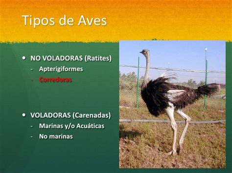 Sistema Excretor de las Aves