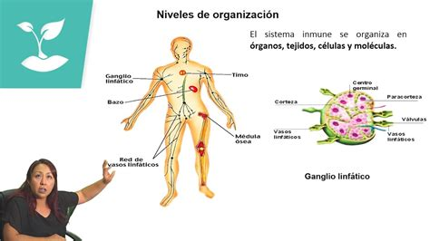 SISTEMA INMUNE/PSU BIOLOGÍA/CLASE N°34   YouTube