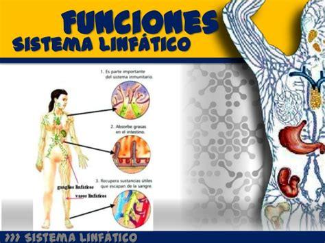 Sistema linfatico e inmunologico