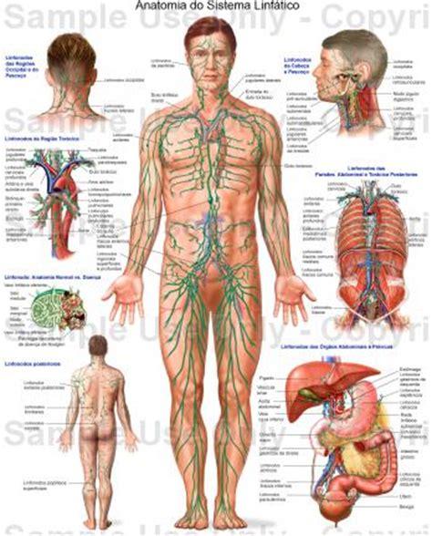 Sistema Linfatico Humano   Imagens | Rei da Verdade