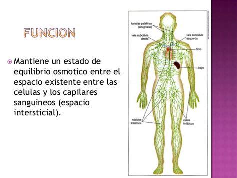 Sistema linfatico presentacion