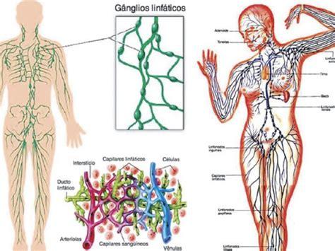 Sistemas del cuerpo humano: Sistema linfático | ElPopular.pe