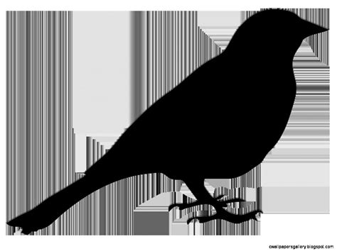 Sitting Bird Silhouette | Wallpapers Gallery