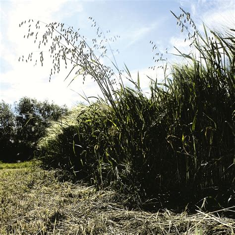 Slow herbicide resistant weeds with layered herbicides