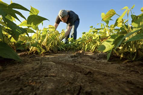 Small landholders and horticulture | Agriculture and Food