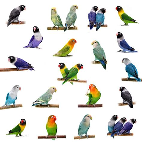 Small Parrots | The Different Types of Parrot | Parrots ...