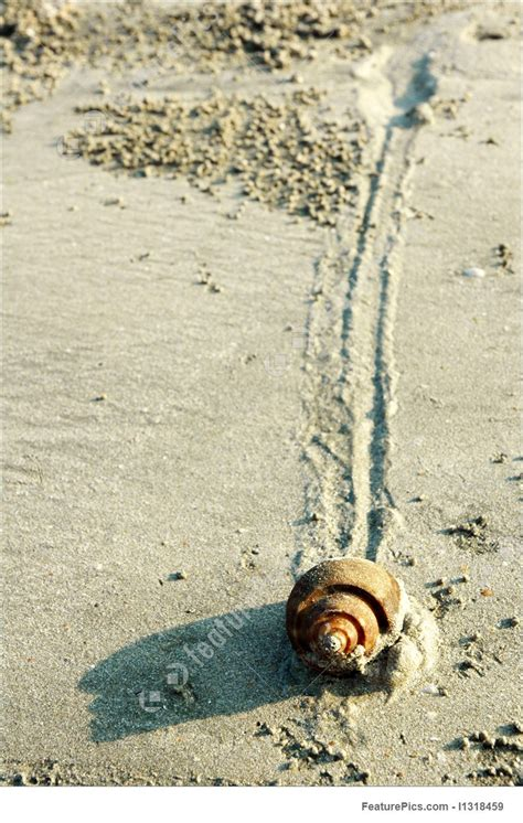 Snail Slow Pace On Sand Stock Picture I1318459 at FeaturePics