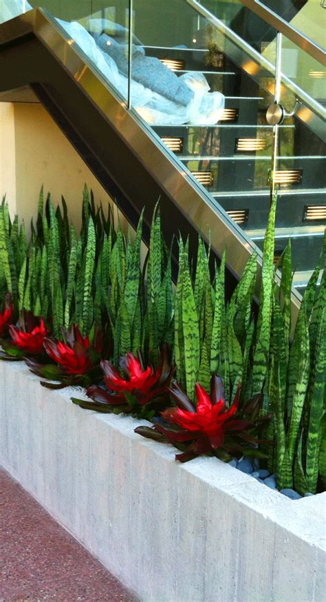 Snake plants and bromeliads make a strikingly beautiful ...