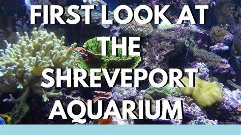 Sneak Peak at the Shreveport Aquarium   YouTube