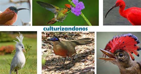 ⇒Nombres de Aves Exóticas del Mundo Fotos y Tipos ...