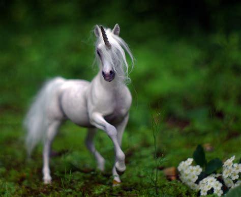 So.. Are Unicorns Real?   PEI Magazine