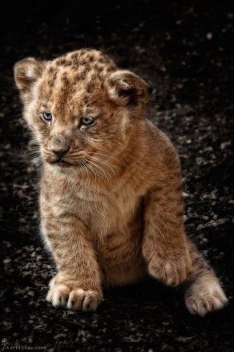 So cute!  avec images  | Bébés animaux, Animaux les plus ...