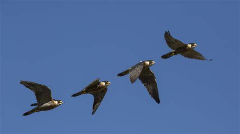 """Sólo por mirar las aves del cielo te pueden """"caer"""" unos ..."""