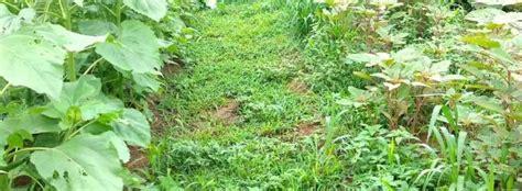 Soluciones naturales para eliminar las malas hierbas de tu ...
