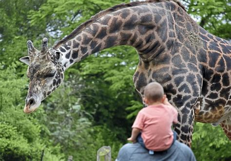 Some animals are people watching as Pittsburgh Zoo reopens ...