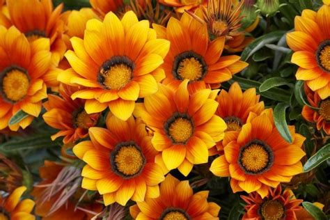 Some of the most beautiful and popular flowers in Spain ...