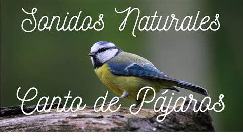 Sonido Relajante de Pájaros Cantando    Sonidos de la ...