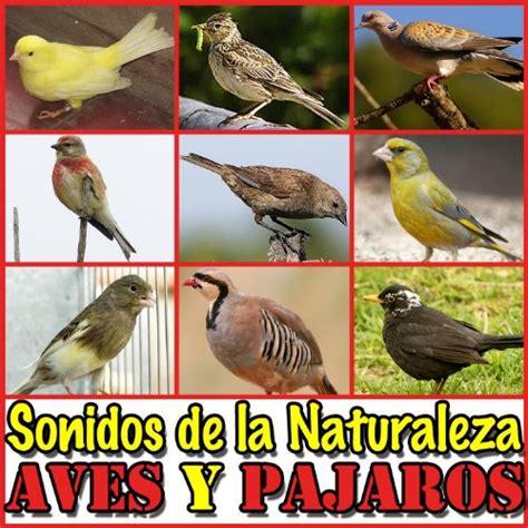 Sonidos de la Naturaleza. Aves y Pajaros by Sonido y ...