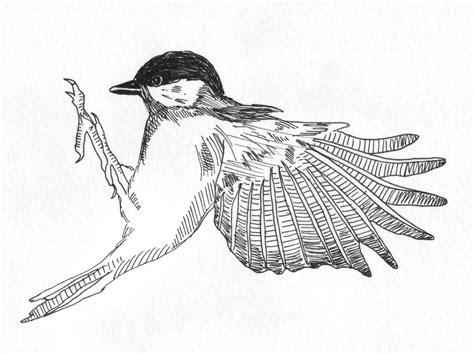 sophie brabbins: Bird Drawings