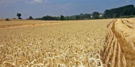 Soriano anuncia el pago de 1,2 millones para agrosistemas ...