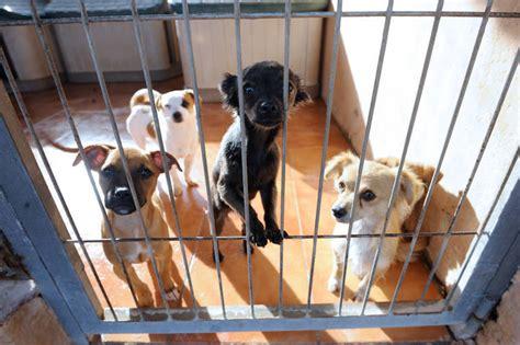 SOS de los refugios de animales: sin adopciones están al ...