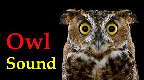 sound of owl at night   voice of bird   YouTube