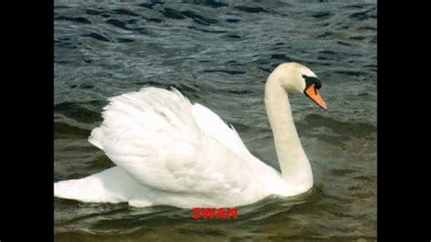 Sounds of wild nature: wild animals, birds, sea animals ...