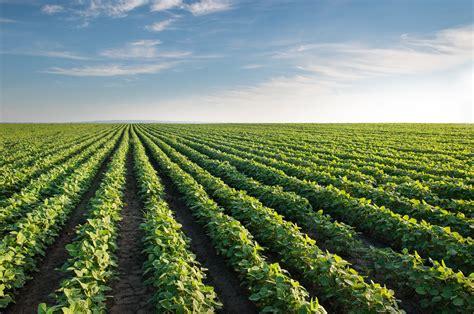 Soybean Field | NOVA Calidad en tus cultivos