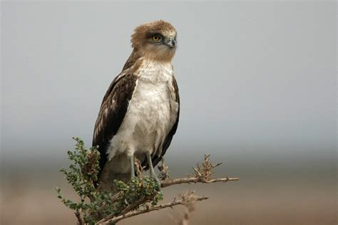 Spanish Birds of Prey Make a Killing in Valencia   Simply ...